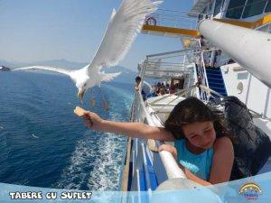 Hranind pescarusii, Thassos