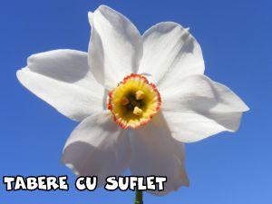 Narcisa1